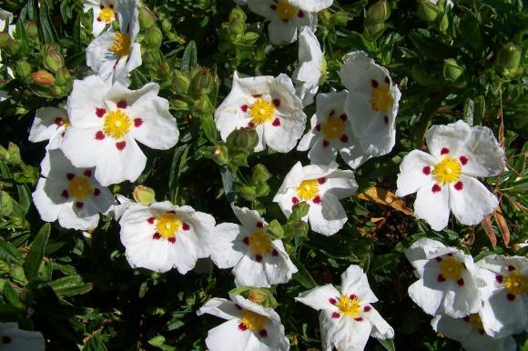 http://lancien.cowblog.fr/images/ZFleurs2/Copiede1001272.jpg