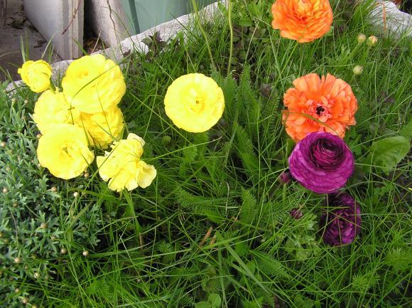 http://lancien.cowblog.fr/images/ZFleurs2/P4190151.jpg