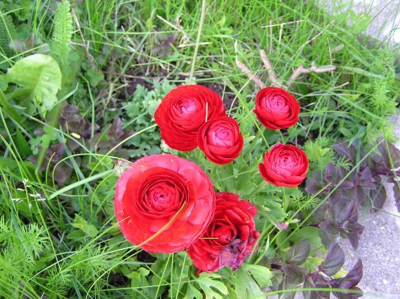 http://lancien.cowblog.fr/images/ZFleurs2/P4190152.jpg