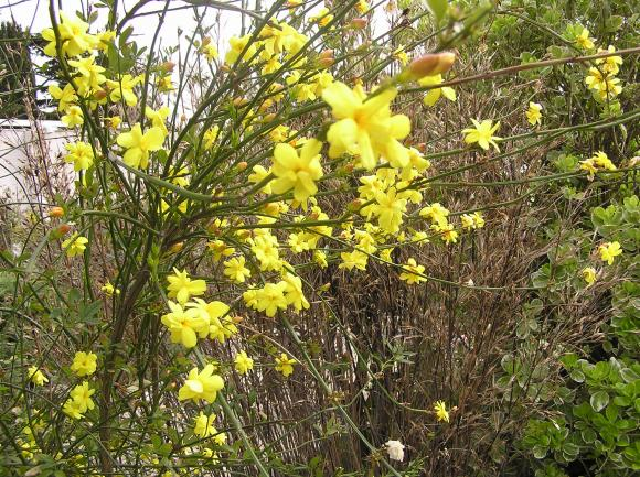 http://lancien.cowblog.fr/images/ZFleurs2/P4230094-copie-1.jpg