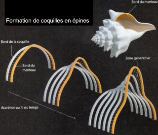 http://lancien.cowblog.fr/images/epines1.jpg