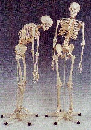http://lancien.cowblog.fr/images/images/squelettes181-copie-1.jpg