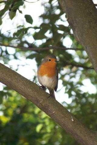 http://lancien.cowblog.fr/images/oiseaux/1001536-copie-1.jpg