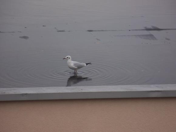 http://lancien.cowblog.fr/images/oiseaux/1004346.jpg