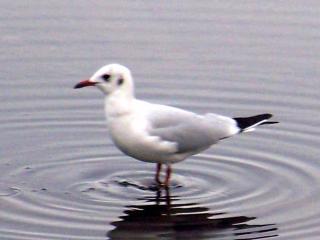 http://lancien.cowblog.fr/images/oiseaux/1004346Version2.jpg
