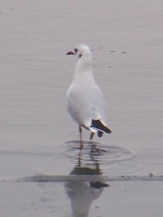 http://lancien.cowblog.fr/images/oiseaux/1004347Version3.jpg
