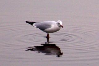 http://lancien.cowblog.fr/images/oiseaux/1004348Version2.jpg