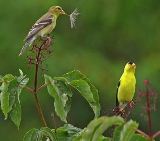 http://lancien.cowblog.fr/images/oiseaux/2oiseaux.jpg