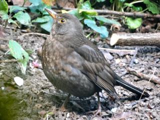 http://lancien.cowblog.fr/images/oiseaux/DSC00895.jpg