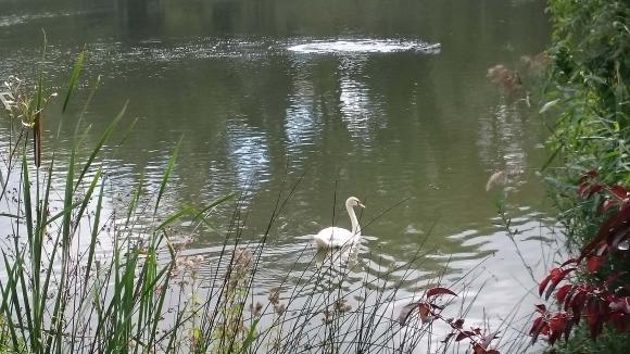 http://lancien.cowblog.fr/images/oiseaux/DSC0844.jpg