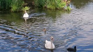 http://lancien.cowblog.fr/images/oiseaux/DSC0850.jpg