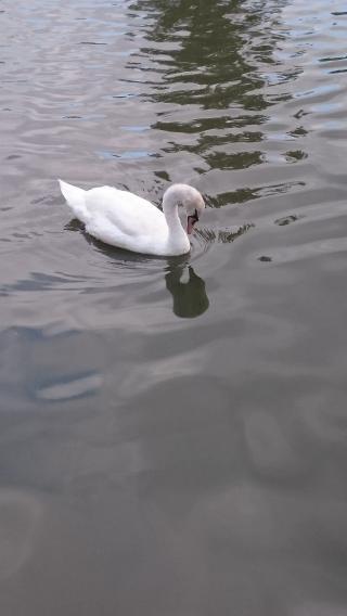 http://lancien.cowblog.fr/images/oiseaux/DSC0861.jpg