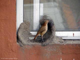 http://lancien.cowblog.fr/images/oiseaux/Diapositive02.jpg