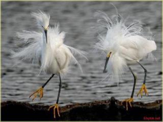 http://lancien.cowblog.fr/images/oiseaux/Diapositive03.jpg