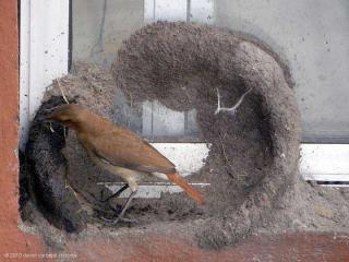 http://lancien.cowblog.fr/images/oiseaux/Diapositive05.jpg