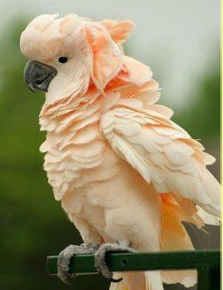 http://lancien.cowblog.fr/images/oiseaux/Diapositive08-copie-2.jpg
