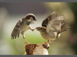 http://lancien.cowblog.fr/images/oiseaux/Diapositive13.jpg