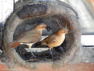 http://lancien.cowblog.fr/images/oiseaux/Diapositive19.jpg