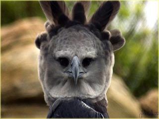 http://lancien.cowblog.fr/images/oiseaux/Diapositive25.jpg