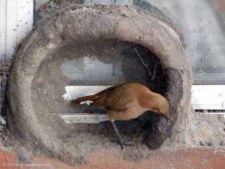 http://lancien.cowblog.fr/images/oiseaux/Diapositive27.jpg