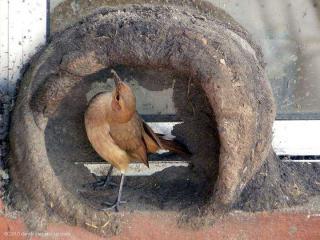 http://lancien.cowblog.fr/images/oiseaux/Diapositive29.jpg