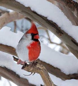 http://lancien.cowblog.fr/images/oiseaux/Diapositive30.jpg
