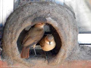 http://lancien.cowblog.fr/images/oiseaux/Diapositive31.jpg