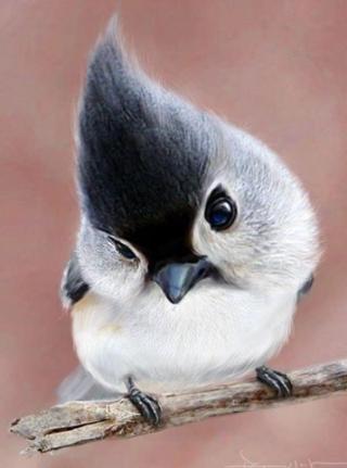 http://lancien.cowblog.fr/images/oiseaux/Diapositive38.jpg