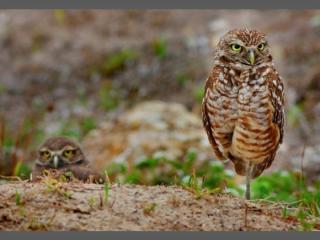 http://lancien.cowblog.fr/images/oiseaux/Diapositive5.jpg