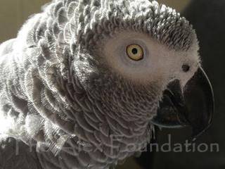 http://lancien.cowblog.fr/images/oiseaux/Griffin2.jpg
