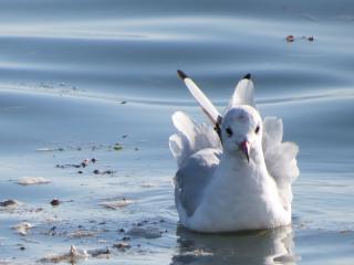 http://lancien.cowblog.fr/images/oiseaux/IMG04132-copie-2.jpg