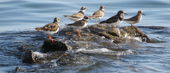 http://lancien.cowblog.fr/images/oiseaux/IMG04304.jpg