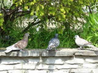 http://lancien.cowblog.fr/images/oiseaux/P1000428.jpg