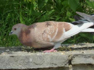 http://lancien.cowblog.fr/images/oiseaux/P1000432.jpg