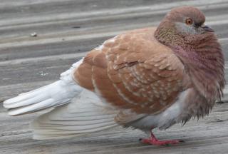 http://lancien.cowblog.fr/images/oiseaux/P1010396.jpg