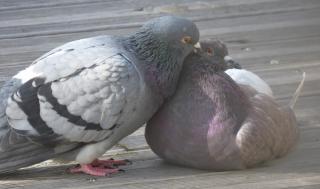 http://lancien.cowblog.fr/images/oiseaux/P1020425-copie-1.jpg