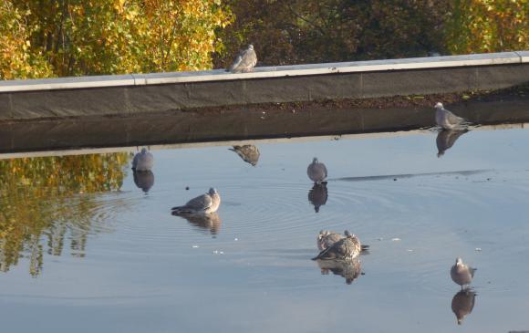 http://lancien.cowblog.fr/images/oiseaux/P1020436.jpg