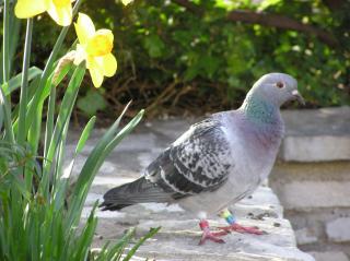 http://lancien.cowblog.fr/images/oiseaux/P3240072.jpg