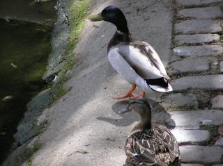 http://lancien.cowblog.fr/images/oiseaux/P5070195.jpg