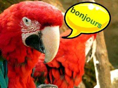 http://lancien.cowblog.fr/images/oiseaux/article1221163.jpg