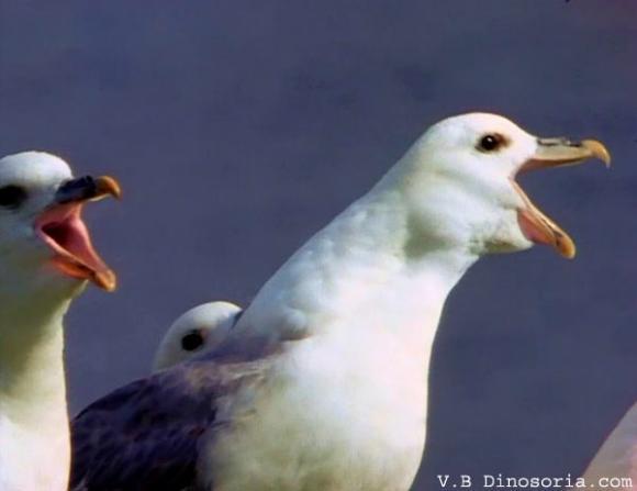 http://lancien.cowblog.fr/images/oiseaux/goelandd3.jpg
