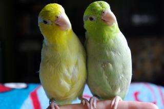 http://lancien.cowblog.fr/images/oiseaux/lAncien41.jpg