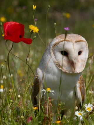 http://lancien.cowblog.fr/images/oiseaux/lAncien56.jpg