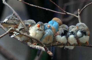 http://lancien.cowblog.fr/images/oiseaux/lAncien9.jpg