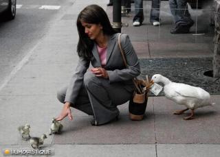 http://lancien.cowblog.fr/images/oiseaux/oievoleusedargent.jpg