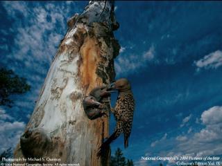 http://lancien.cowblog.fr/images/oiseaux/oiseau.jpg