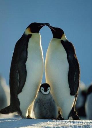 http://lancien.cowblog.fr/images/oiseaux/pingouins.jpg